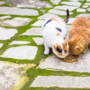 Street cats eating food - Concept of homeless animals