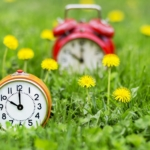 Summertime - clocks and flowers in the grass
